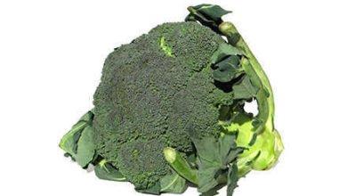 Brokkoli Kalorien hat sehr gesunde Eigenschaften