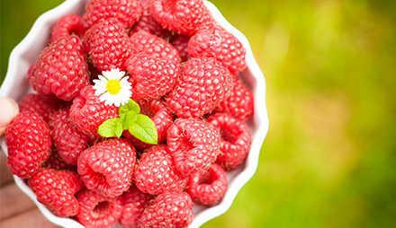 Beeren sind ideale Lebensmittel