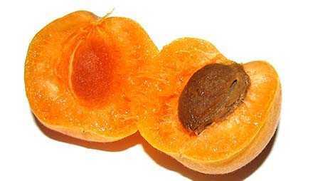 Aprikosen sind sehr gesund