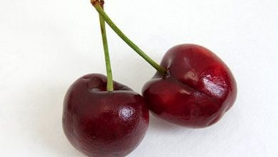 Photo of Wie viele Kalorien haben Kirschen?