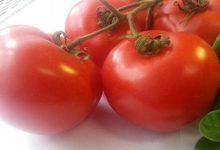 tomaten haben viele vitamine mineralstoffe