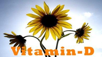 Photo of Die 10 besten Vitamin D Lebensmittel