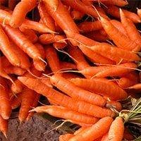 Medizin oder Mythos: Gelbe Rübe, Möhre oder Karotte - gesund sind sie auf jeden Fall.