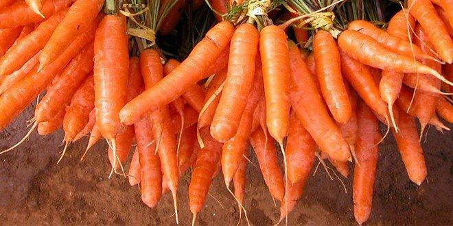 Sie ist der Dauerbrenner der Gemüsegeschichte und wird auch Möhre genannt