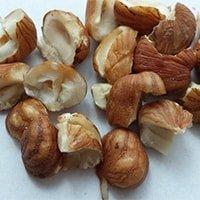 Die Erdnuss enthällt Vitamine und Mineralstoffe