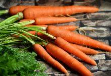 Karotten Kalorien und Nährwerte.Kohlenhydrate, Fett der von Möhren