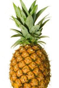 Ananaspflanzen werden überwiegend vegetativ vermehrt.