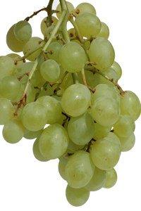 Trauben werden gerne unterschätzt.