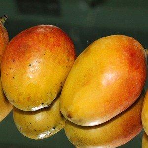 Die Mango gilt als die Königin unter den exotischen Früchten, ihr Fruchtfleisch ist orangefarben und sehr saftig.
