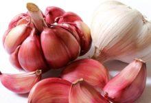 Photo of Knoblauch, Kalorien und Nährwerte – gesund und unverzichtbar in der Küche