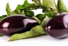 Aubergine Kalorien und Nährwerte