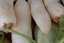 Radieschen Kalorien und Nährwerte, sie sind ein sehr gesundes Gemüse.