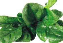 Photo of Spinat, Kalorien und Nährwerte – Aromatisch, vielfältig und gesund