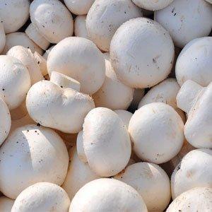 Pilze strotzen nur so vor gesunden Vitalstoffen