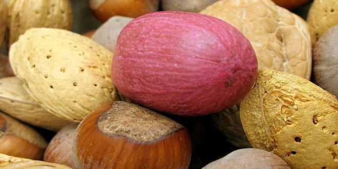 Pekannüsse sind sehr Nährstoffreich mit wenig Kalorien.