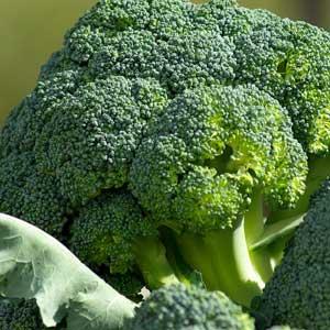 Geerntet wird Broccoli, sobald die mittlere Blume gut ausgebildet und noch geschlossen ist.