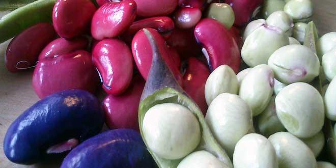 Im Laufe der Stammesgeschichte haben sich innerhalb der Hülsenfrüchtler mehrfach aus Hülsen Schließfrüchte entwickelt, wie etwa bei der Tamarinde, der Frucht des Tamarindenbaums oder beim Klee.