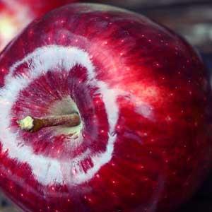 icht zu verwechseln mit den Äpfeln sind die nicht näher verwandten Granatäpfel (Punica granatum).