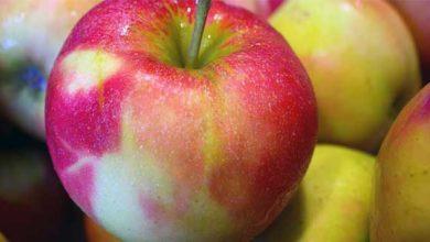 Photo of Warum der Apfel das Immunsystem stärkt