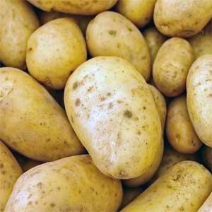 Kartoffeln sind aufrecht oder kletternd wachsende, krautige Pflanzen, die über 1 m hoch werden können.