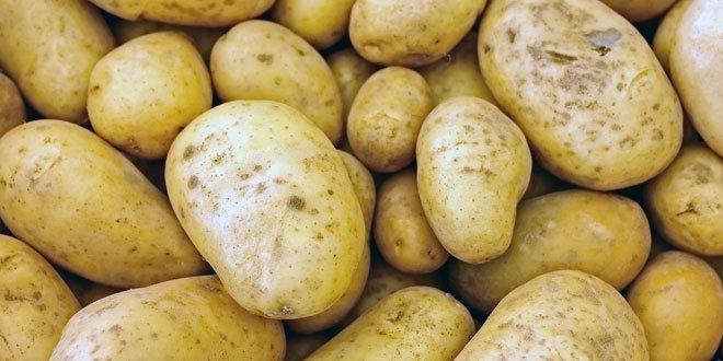 m Allgemeinen Sprachgebrauch meint man mit Kartoffeln meist die unterirdischen Knollen, mit denen die Pflanze sich vegetativ vermehren kann.