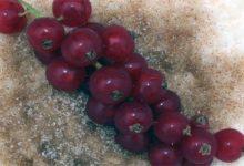 Photo of Milchreis, Kalorien und Nährwerte mit Kompott, Zimt und Zucker