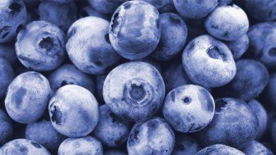 Kalorien Blaubeeren. Blaubeeren werden meist Heidelbeeren genannt.