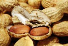 Photo of Erdnüsse, Kalorien und Nährwerte der Energiespender