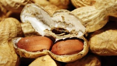 Erdnüsse sind reich an Vital und Nährstoffen.