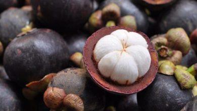 Die Mangostan ist eine kleine, runde, tropische Frucht.