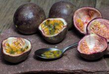 Die Maracuja ist eine von etwa 100 Passionsfruchtsorten.