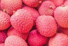 Photo of Litschi – Kalorien und Nährwerte der Litchi chinensis