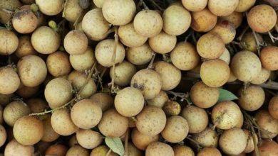 Photo of Longan Kalorien und Nährwerte der Dimocarpus longan