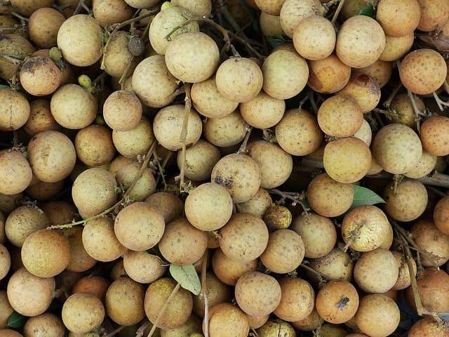 Die Longan ist sehr gesund und enthält wenig Kalorien und kaum Fett.