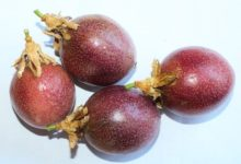 Photo of Grenadillen – Kalorien und Nährwerte der Passiflora