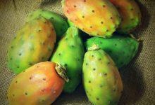 Kaktusfeigen sind die Früchte des Feigenkaktus und gelten als Energiespender.
