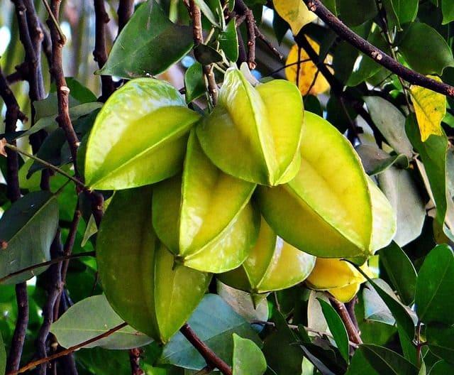 Die Karambole ist ein säurereiches und saftiges Obst aus den Tropen.