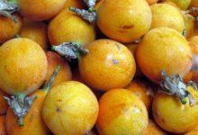 Die Curuba wird gerne zur Herstellung von Desserts und Getränken verwendet.