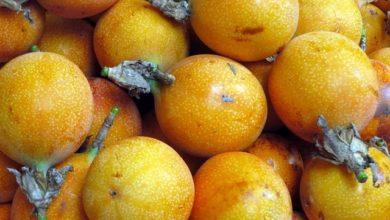 Photo of Curuba – Kalorien und Nährwerte der Passionsfrucht