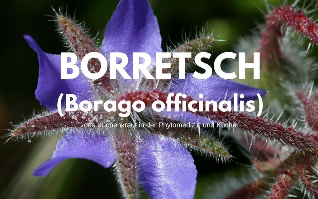 Borretsch und Borretschöl (Borago officinalis) | Erfahren Sie alles zur Pflege über dieses Küchenkraut