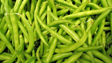 Grüne Bohnen Kalorien und Nährwerte, Inhaltsstoffe