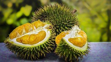 Die Durian Frucht oder Zibetfrucht, Stinkfrucht genannt