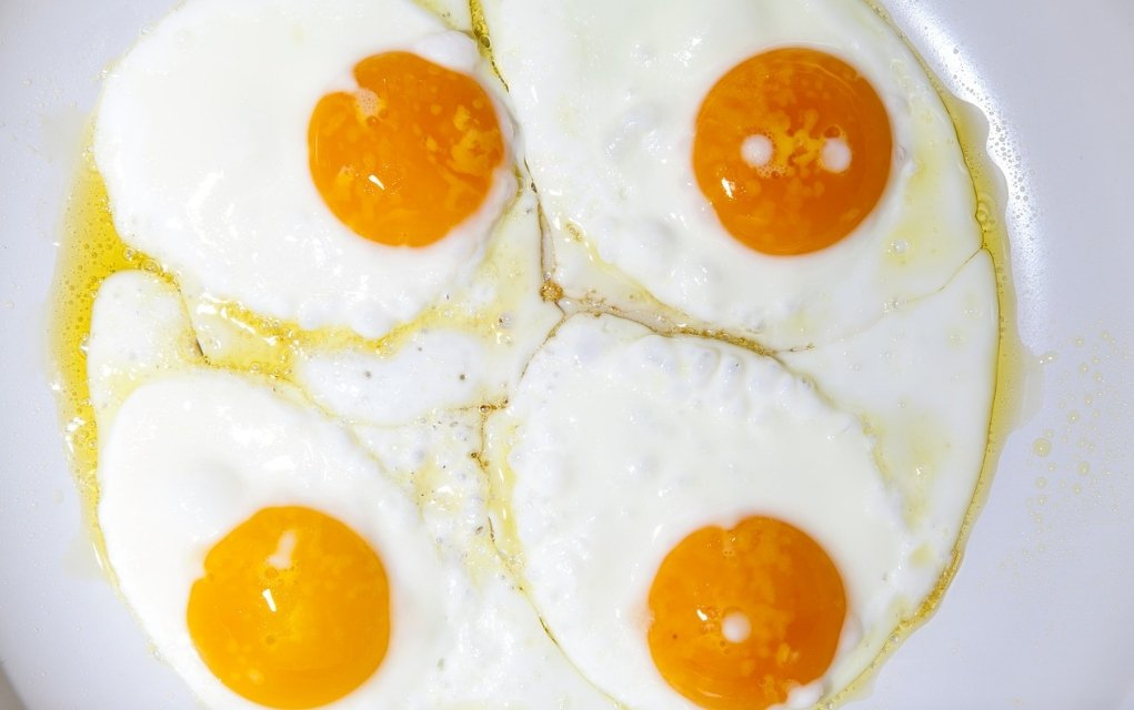 Proteine die Bausteine des Lebens
