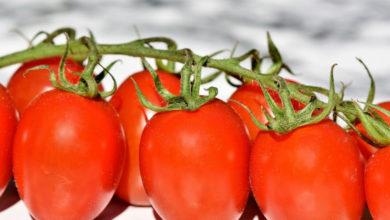 Photo of Tomaten Kalorien und Nährwerte der roten Powerfrucht
