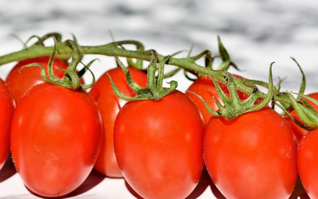 Tomaten Kalorien und Nährwerte der roten Powerfrucht